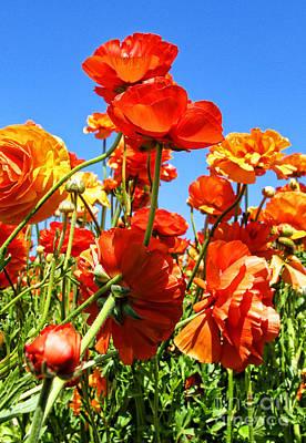 Photograph - Orange You Ready Ranunculus Flowers By Diana Sainz  by Diana Raquel Sainz