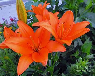 Photograph - Orange You Are Pretty by Donna Cavanaugh