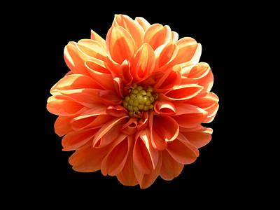 Photograph - Orangeman by Doug Norkum