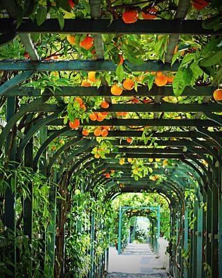 Lake Como Photograph - Oranges And Lemons On A Green Trellis by Brooke T Ryan