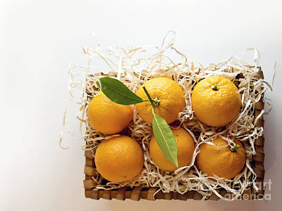 Photograph - Oranges by Cindy Garber Iverson