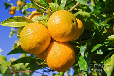 Outerspace Patenets Rights Managed Images - Oranges on a tree Royalty-Free Image by Antonio Scarpi