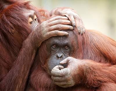 Photograph - Orangrooming by David Beebe