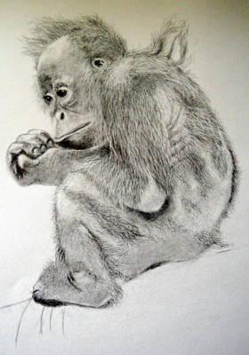 Baby Orangutan Drawing - Orangutan Baby by Rosanna Maria
