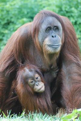 Orangutan Art Print by DejaVu Designs
