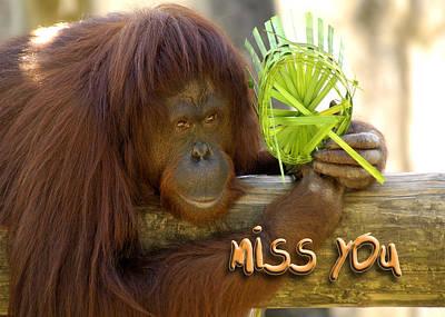 Photograph - Orangutan Female by Carolyn Marshall