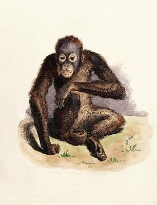 Orangutan Wall Art - Photograph - Orangutan by King's College London