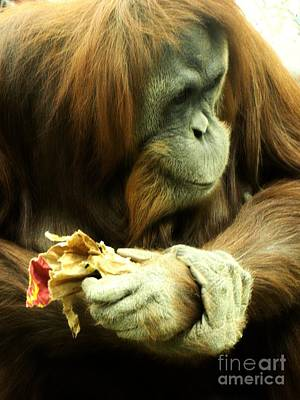 Cheyenne Mountain Zoo Photograph - Orangutan by Michelle Frizzell-Thompson