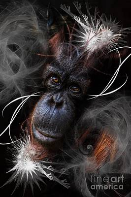 Photograph - Orangutan One by Ken Frischkorn