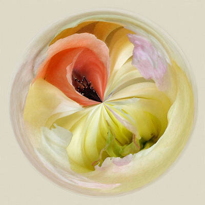 Photograph - Orb 4... Poppy Meets Peony by Karen Lynch