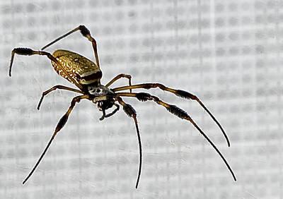 Orb Spider 4 Print by Lynn Andrews