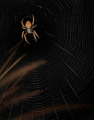 Photograph - Orb Spider by Joseph G Holland
