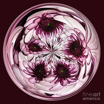 Digital Art - Orbital Gerberas by Kaye Menner