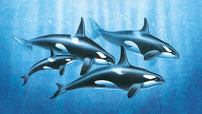 Orca Group Art Print by JQ Licensing