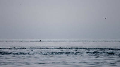 Photograph - Orcas Are Here by Ronda Broatch