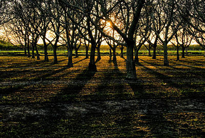 Photograph - Orchard At Sunset by Robert Woodward