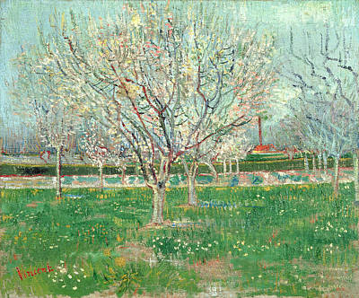 Trees Blossom Painting - Orchard In Blossom, 1880  by Vincent van Gogh