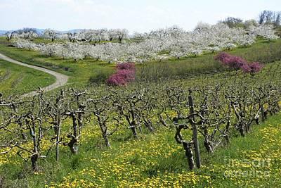 Orchard In France Art Print by Bernard Jaubert