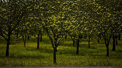 Photograph - Orchard In Springtime. Independence Texas  by Connie Fox
