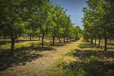 Orchard In West Michigan Art Print