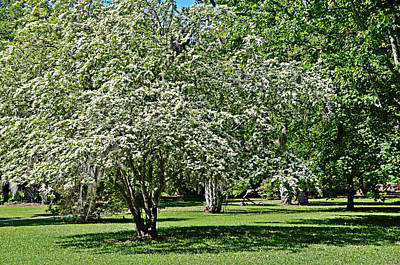 Photograph - Orchard by Linda Brown