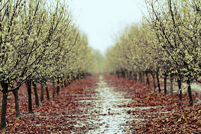 Depth Wall Art - Photograph - Orchard by Rebecca Cozart