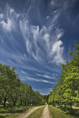 Photograph - Orchard Road In West Michigan With Cirrus Clouds  by Randall Nyhof