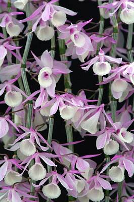 Photograph - Orchid 12 by Sheila Byers