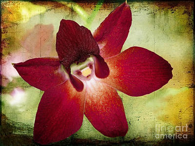 Photograph - Orchid 2 by Ellen Cotton