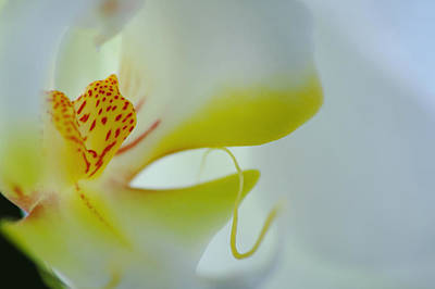 Wall Art - Photograph - Orchid 2 by Jack Daulton