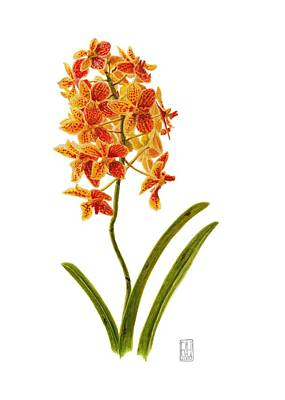 Ink Painting - Orchid 2 by Richard Harpum