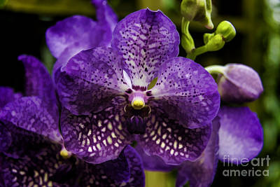 Digital Art - Orchid 3 by David Doucot