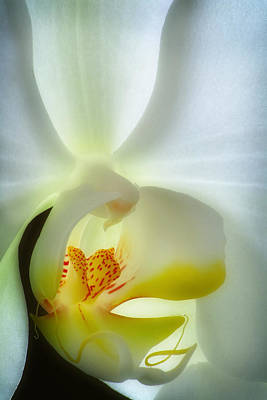 Wall Art - Photograph - Orchid 3 by Jack Daulton