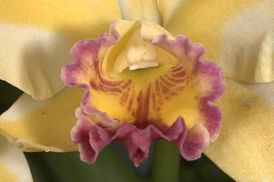 Orchid 478 Art Print