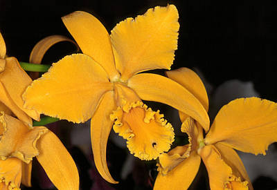Orchid 5 Art Print by Andy Shomock
