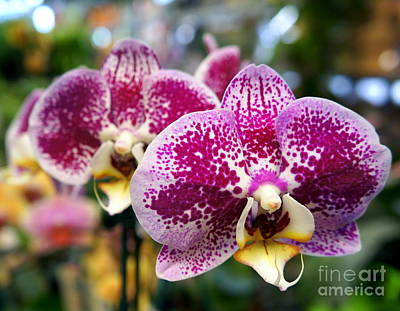 Photograph - Orchid 9 by Rachel Munoz Striggow