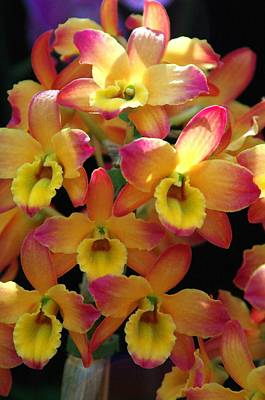 Photograph - Orchid 9 by Sheila Byers