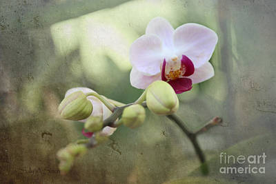 Photograph - Orchid And Textures by Sally Simon
