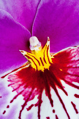 Photograph - Orchid Angel by Joan Herwig