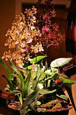 Photograph - Orchid Arrangement by Jane Girardot