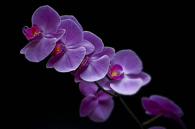 Photograph - Orchid At Night by Patrick Boening