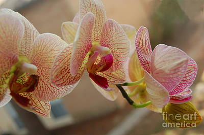 Photograph - Orchid Beauty by Tamyra Crossley