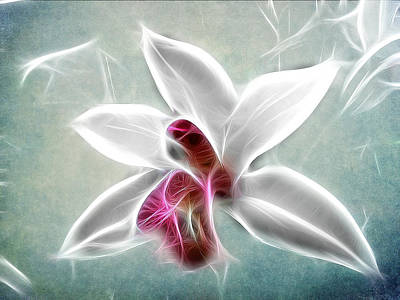Orchid Blues Print by Fiona Messenger