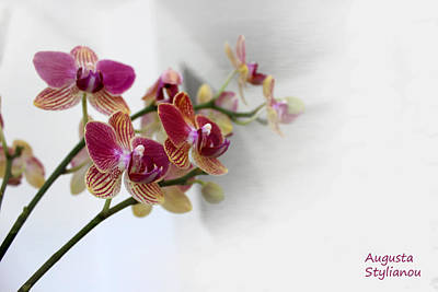 Orchid Branch Art Print by Augusta Stylianou