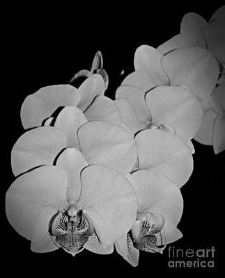 Photograph - Orchid Bunch Bw by Chalet Roome-Rigdon