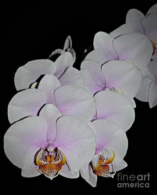 Photograph - Orchid Bunch by Chalet Roome-Rigdon