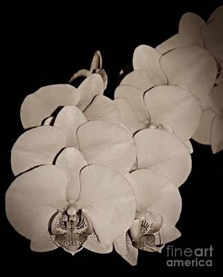 Photograph - Orchid Bunch Sepia by Chalet Roome-Rigdon
