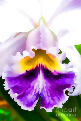 Photograph - Orchid by Carolina Mendez
