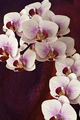 Photograph - Orchid Cascade by Randy Grosse