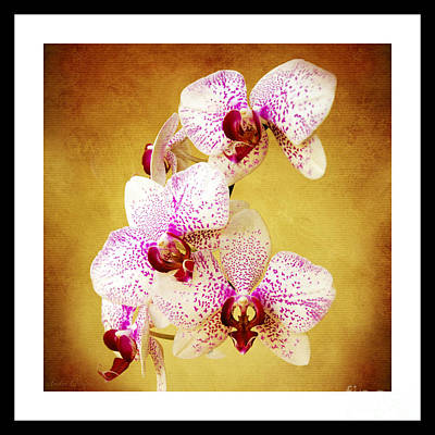 Photograph - Orchid Cascade Square by Andee Design